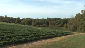 Arkansas Crop Insurance