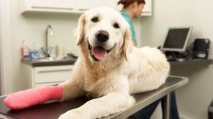 South Carolina Pet Insurance